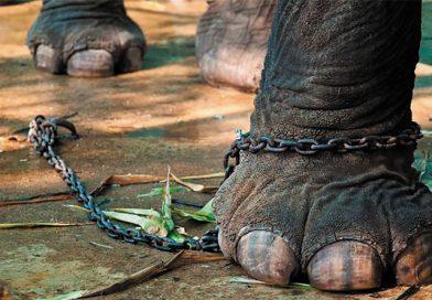Las Montini y Ecópolis Logran Histórico Día: Fin de Circos con Animales Protegidos