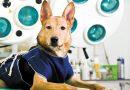 Problemática Animales Vagos: Esteriliza para Avanzar