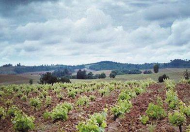 Futuro en Juego: Biodiversidad para la Vitivinicultura