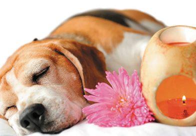 Arôm Vet de SAVE bienestar animal: Aromaterapia Científica para Animales