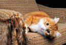 Dirigiendo la Naturaleza: Mi Gato Araña Todo