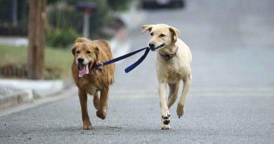 En Perros y Gatos: El Vagabundeo
