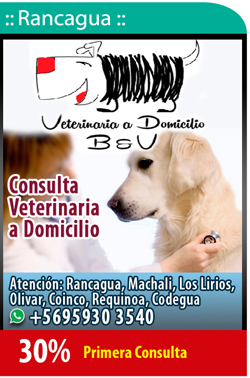 Veterinaria a Domicilio ByV