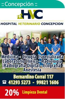 Hospital Veterinario Concepción
