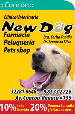 Clinica Veterinaria New Dog