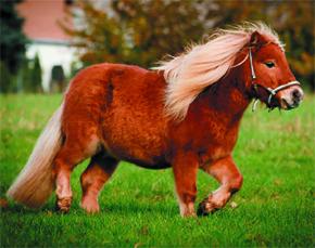 equinos_ed44
