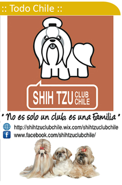 Shih Tzu Club Chile