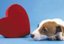 ¿Qué debo hacer con mi perro cachorro que tiene insuficiencia cardíaca?