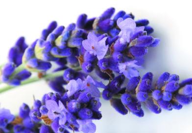 Experta Explica Diferencia: Aromaterapia No es Aromatizar